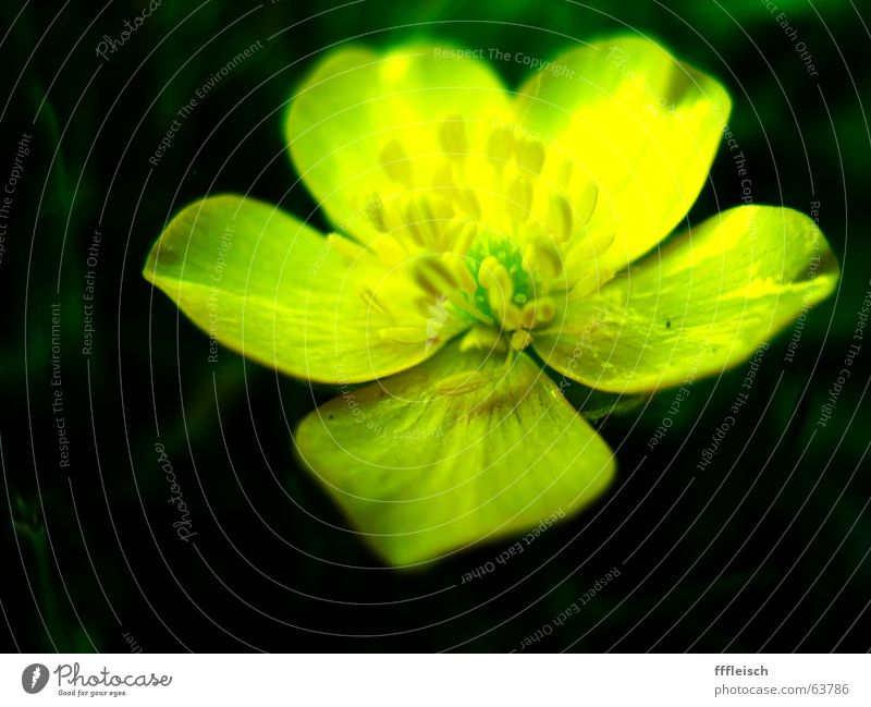 Yellow flower Meadow Dark Green Flower Small Summer Physics Warmth Macro (Extreme close-up)