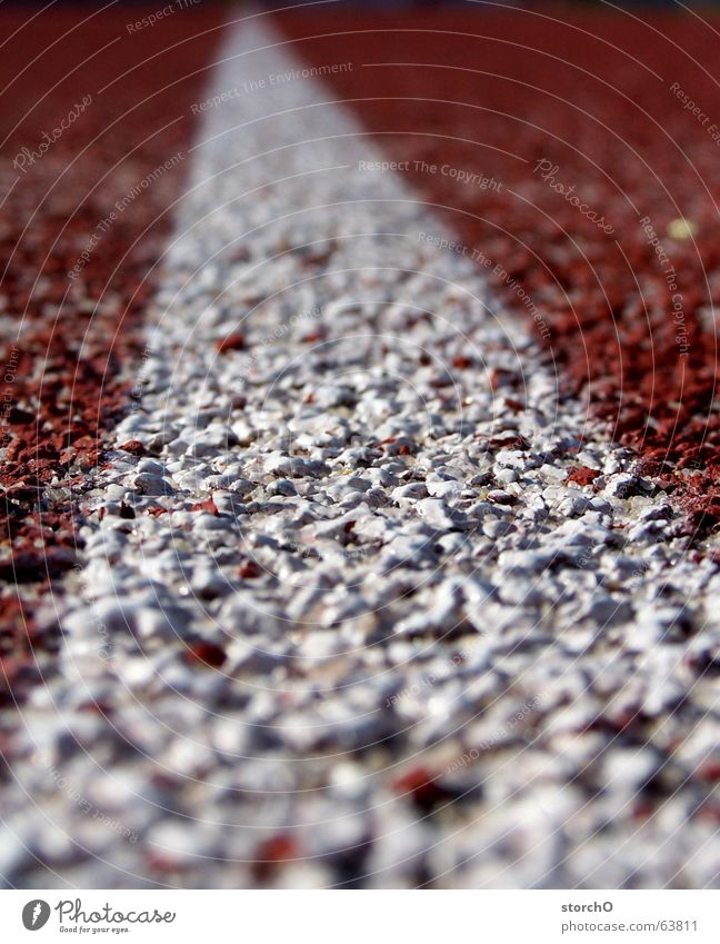 White Red Summer Sports Walking Free Railroad Track and Field Top Curve Thuringia Relay race Hundred-metre sprint Long jump Gotha Sports meet