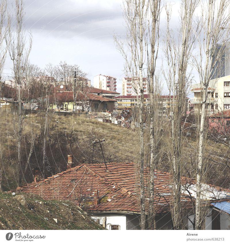 hillside location Plant Tree Poplar Ankara Turkey Anatolia Town Capital city Outskirts Deserted House (Residential Structure) Detached house block of flats