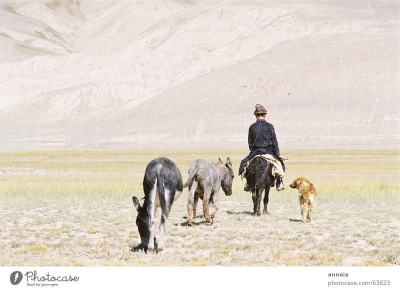 going home Retreat Home Backward Herdsman Dog Steppe Friendship Animal Cap Home country Horizon back shepherd boy Equestrian sports Far-off places Fatigue