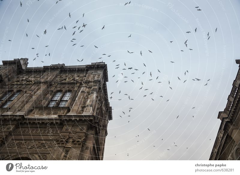 swarm Istanbul House (Residential Structure) Castle Manmade structures Building Dolmabahçe mosque Animal Bird Flock Flying Threat Wild Circle Colour photo
