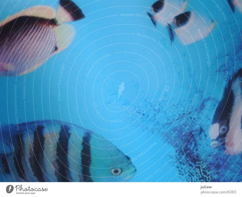 Water Ocean Vacation & Travel Transport Fish Dive Aquarium