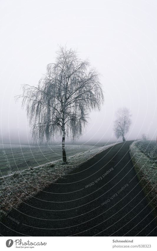 Silent ways Environment Nature Landscape Earth Winter Fog Ice Frost Snow Tree Grass Foliage plant Wild plant Park Meadow Field Esthetic Cold Lanes & trails