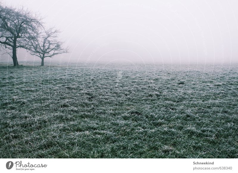 Lonesome Place Environment Nature Landscape Autumn Winter Climate Fog Ice Frost Plant Tree Grass Foliage plant Wild plant Garden Park Meadow Field Cold Green