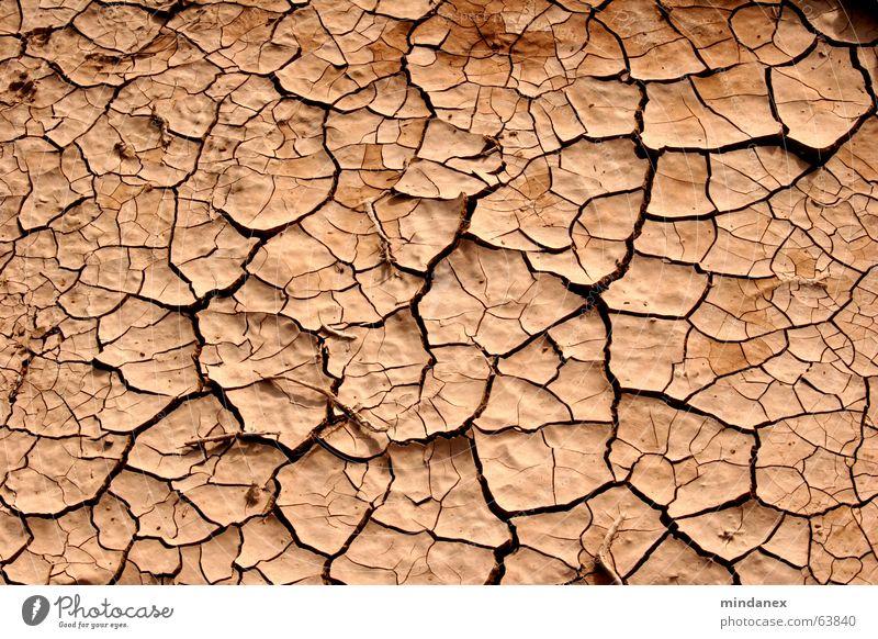 cracks & furrows Loam Drought Beige Wood Field Desert Floor covering Crack & Rip & Tear Furrow