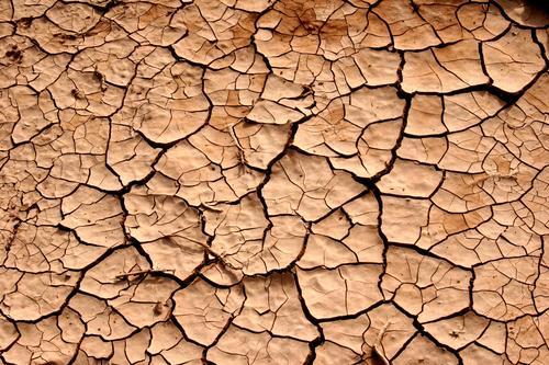 Wood Field Floor covering Desert Crack & Rip & Tear Furrow Beige Drought Loam