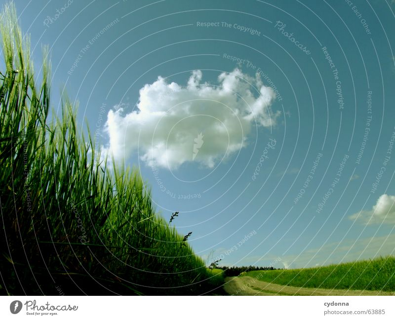 Nature Sky Summer Clouds Forest Lanes & trails Landscape Field Wind Weather Grain Direction Grain Roll Impression