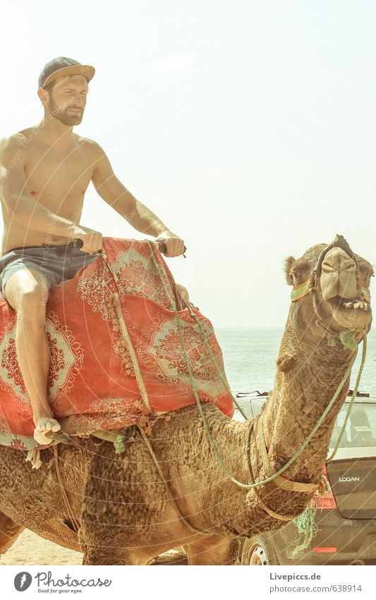 2 camels on holiday Vacation & Travel Tourism Trip Summer Summer vacation Sun Beach Ocean Island Waves Human being Masculine Man Adults Body 1 30 - 45 years