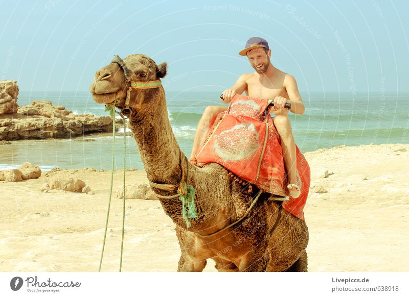 2 camels on holiday Vacation & Travel Tourism Trip Summer Summer vacation Sun Ocean Human being Masculine Man Adults Body 1 30 - 45 years Environment Nature