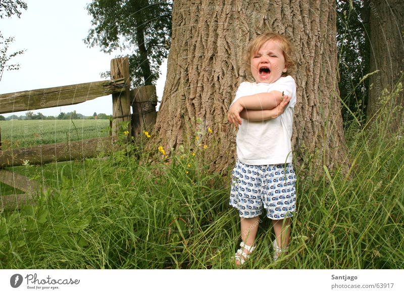 Child Girl Tree Summer Fence Cry