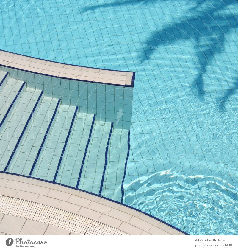 The invisible man Swimming pool Tunisia Palm tree Geometry Vacation & Travel Leisure and hobbies Bird's-eye view Exterior shot Blue Water Border Shadow Tile