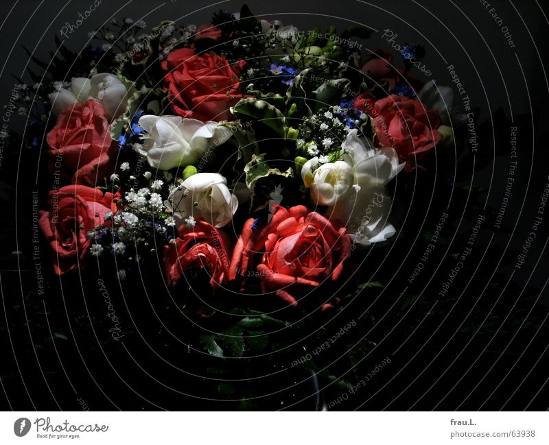 Flower Joy Leaf Dark Decoration Romance Rose Kitsch Delicate Bouquet Still Life Thank you very much Grateful Forget-me-not Pamper Baby's-breath