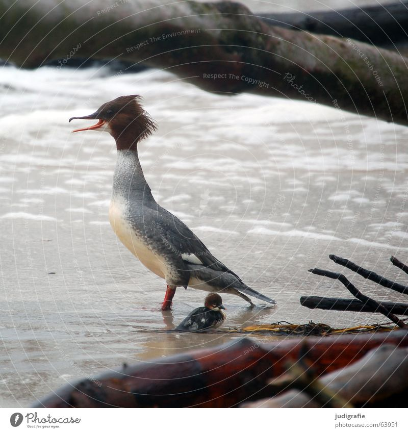 Water Tree Ocean Beach Animal Life Hair and hairstyles Sand Lake Brown Bird Fear Dangerous Threat Feather Protection