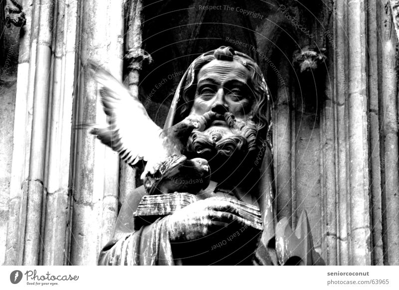 Holy act Pigeon Catholicism Religion and faith Cologne Cathedral Book Reading Facial hair Statue sex drive taboo value decay pigeon shit Wing Dome Feather