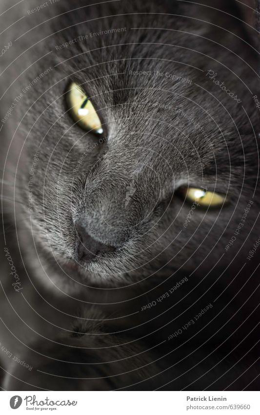 Cat Beautiful Animal Eyes Life Feminine Healthy Power Wild Wild animal Fresh Esthetic Cute Soft Uniqueness Curiosity