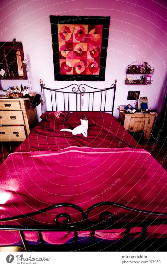 White Red Cat Room Pink Sit Rose Bed Lie Violet Pure Image Middle Rag Nest Magenta