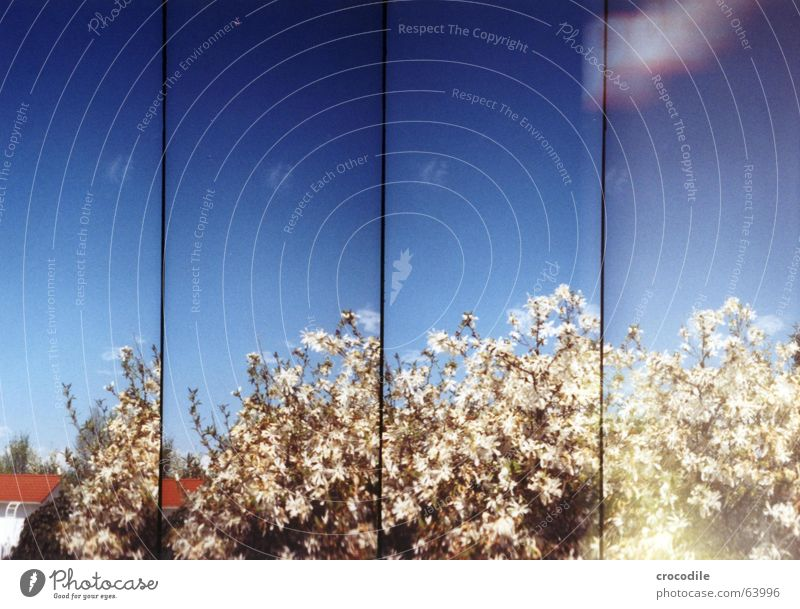 Sky Blue Summer House (Residential Structure) Blossom Spring Beautiful weather Double exposure Lomography Magnolia plants