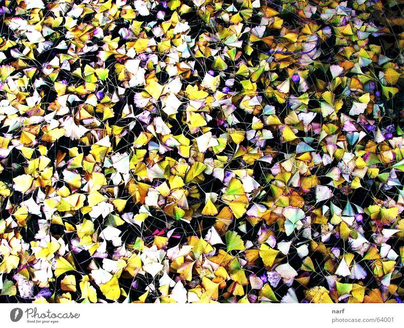 Autumn murder Winter autumn trees grass plan leaves leaf falling Down ground