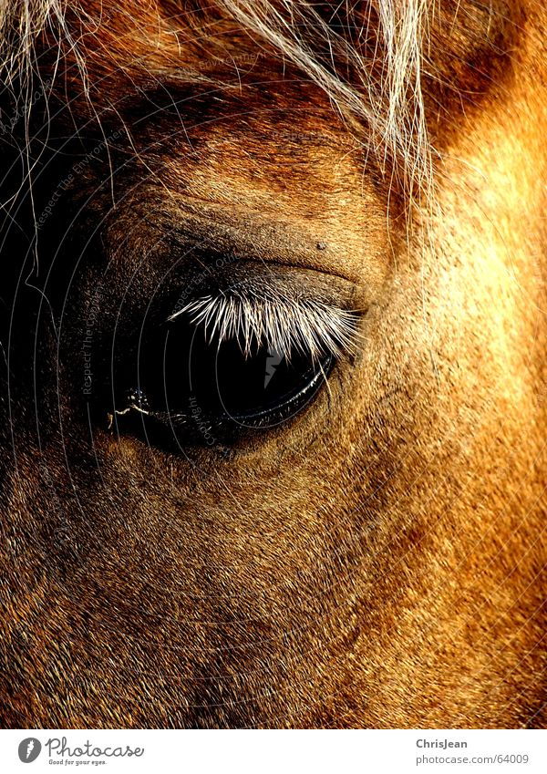 Old Loneliness Eyes Animal Hair and hairstyles Sadness Bright Brown Field Time Fly Gloomy Horse Grief Tracks Americas