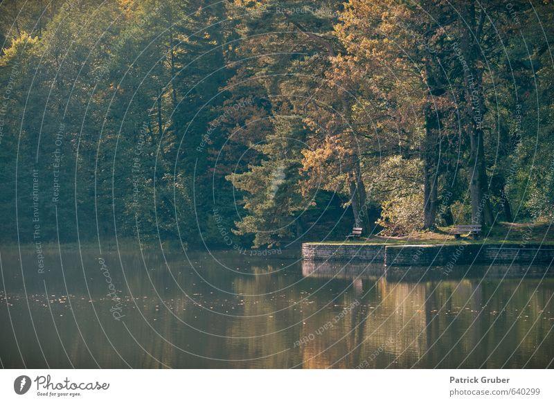 Nature Water Tree Landscape Autumn Lakeside Village Autumnal
