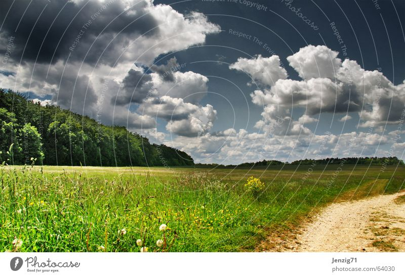 Nature Sky Tree Green Summer Clouds Forest Meadow Grass Lanes & trails Lighting Pasture