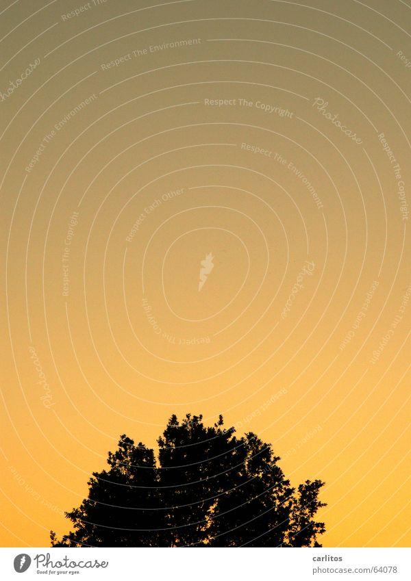 Tree Sun Dusk