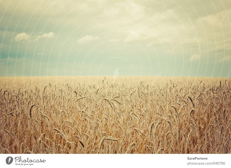 In the field Environment Nature Landscape Plant Earth Air Sky Clouds Horizon Sun Sunlight Summer Autumn Climate Beautiful weather Agricultural crop Field