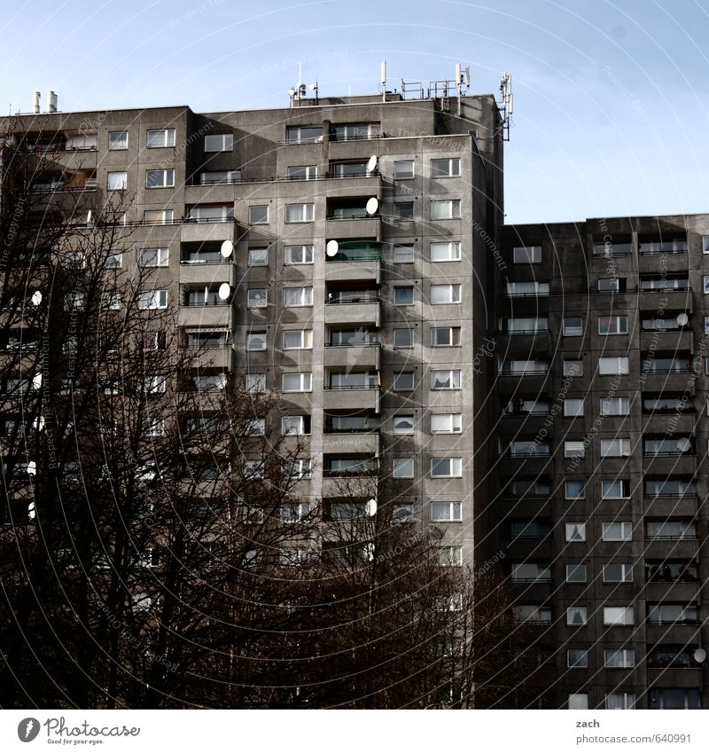 Sky City Tree Loneliness House (Residential Structure) Winter Window Building Architecture Gray Berlin Flat (apartment) Facade Living or residing High-rise