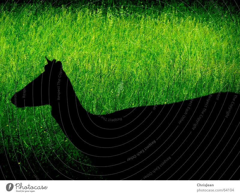shadow figure Shadow Meadow Green Black Animal Deer Processed Life Grass To feed Push Dark Background picture Foreground Sharp Park Wild animal Serene