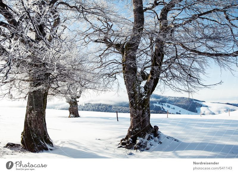 Nature Vacation & Travel Blue White Plant Tree Relaxation Landscape Calm Winter Snow Ice Glittering Idyll Tourism Hiking