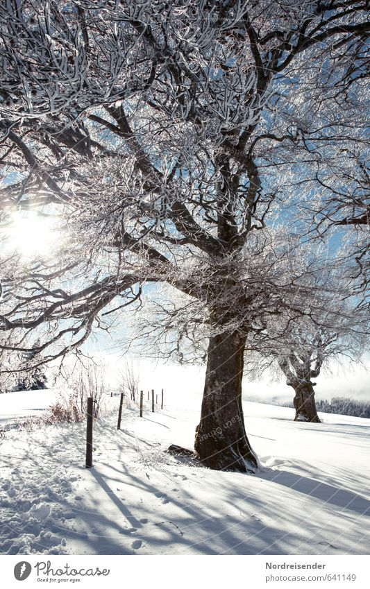Nature Vacation & Travel Blue White Plant Tree Landscape Winter Snow Lanes & trails Ice Tourism Hiking Beautiful weather Trip Frost