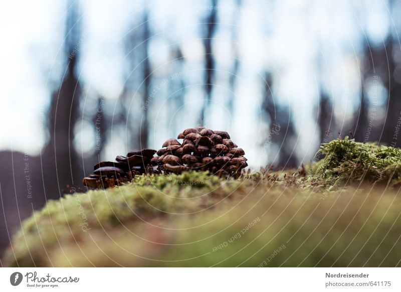 group snuggling Nature Plant Earth Moss Forest Tree stump Mushroom Tree fungus Multiple tufts Woodground Ecological Colour photo Deserted Copy Space top