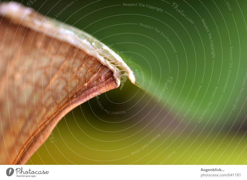 ... connective Plant Orchid Leaf Beautiful Serene Attachment Colour photo Close-up Detail