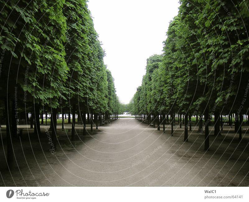 Tree Leaf Lanes & trails Park Paris France Tree trunk Avenue