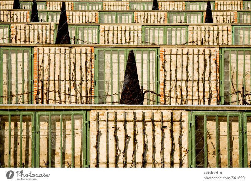 Vineyard terrace slight return Park Potsdam Prussia Chateau Sanssouci Castle wallroth Winter Window Glass Birdhouse Bird's cage Greenhouse Growth Classicism