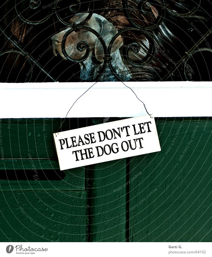 """white door sign hanging on a green door with black inscription """"PLEASE DON'T LET THE DOG OUT"""" in capital letters Dog Hound Hunter Confine Wooden door"""