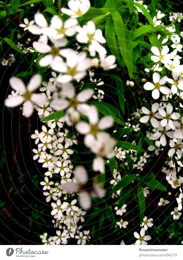 Beautiful White Flower Summer Leaf Blossom Spring