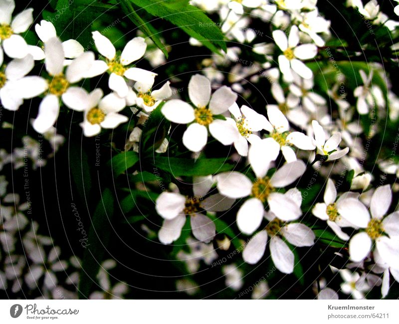 Beautiful White Flower Summer Blossom Spring