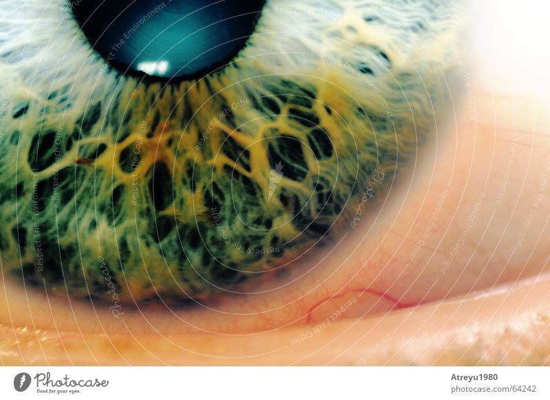 Green Eyes Glittering Health care Snapshot Vessel Blind Pupil Objective Iris Macro (Extreme close-up)