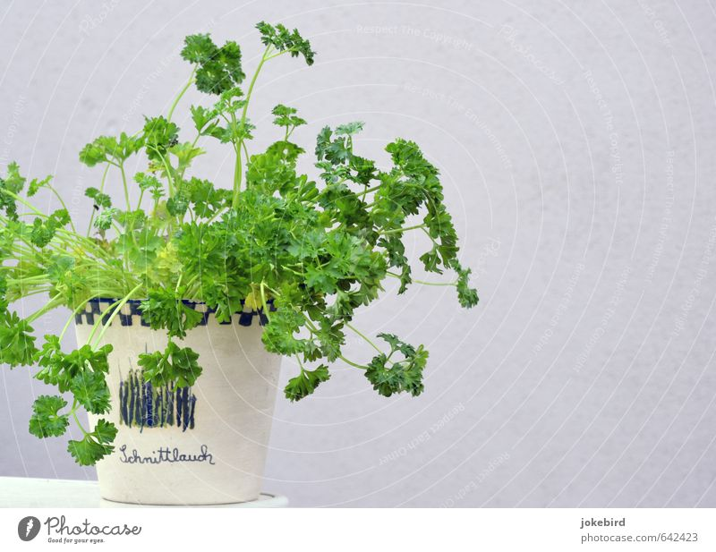 parsley Parsley Herbs Flowerpot Fresh Healthy Green Aromatic Herbs and spices Mix-up Funny Joke Colour photo Exterior shot Deserted Copy Space right