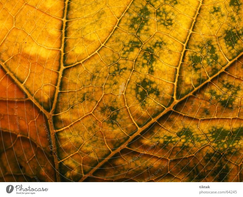 Nature Green Plant Leaf Yellow Warmth Line Brown Lighting Growth Physics Botany Vessel Rachis Provision Limp