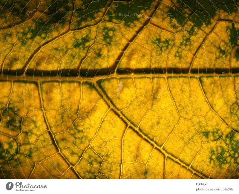 Labyrinth of courgettes 4 Leaf Vessel Underside of a leaf Botany Plant Green Yellow Brown Rachis Light Lighting Limp Leaf green Growth Provision Physics