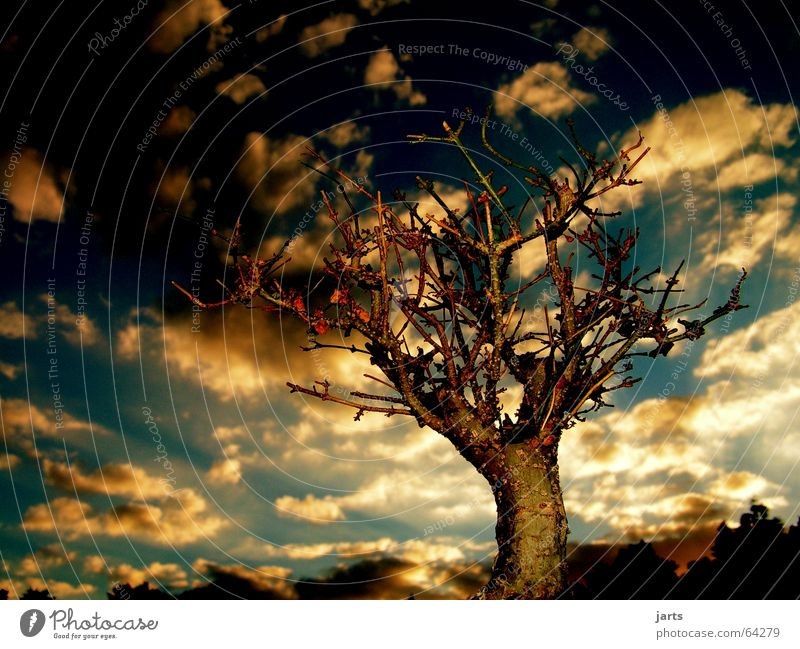 Beautiful Sky Tree Clouds Relaxation Evening Horizon Fairy tale Fantasy literature Sunset Bonsar