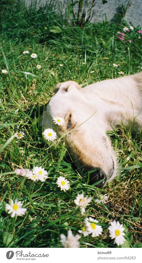 Nature White Green Flower Vacation & Travel Calm Animal Relaxation Meadow Graffiti Sand Dog Dream Contentment Sleep Peace