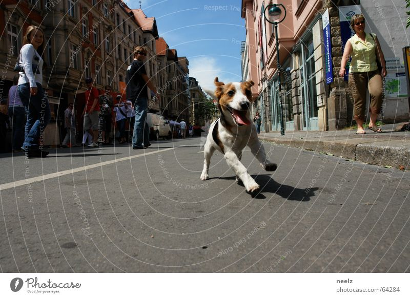 Leipzig dog World Cup 2006 Fan Dog Speed Exuberance Romp Animal Pet Playing Joy Engagement Enthusiasm To go for a walk Passion Mammal Gottschedstr. jack russel