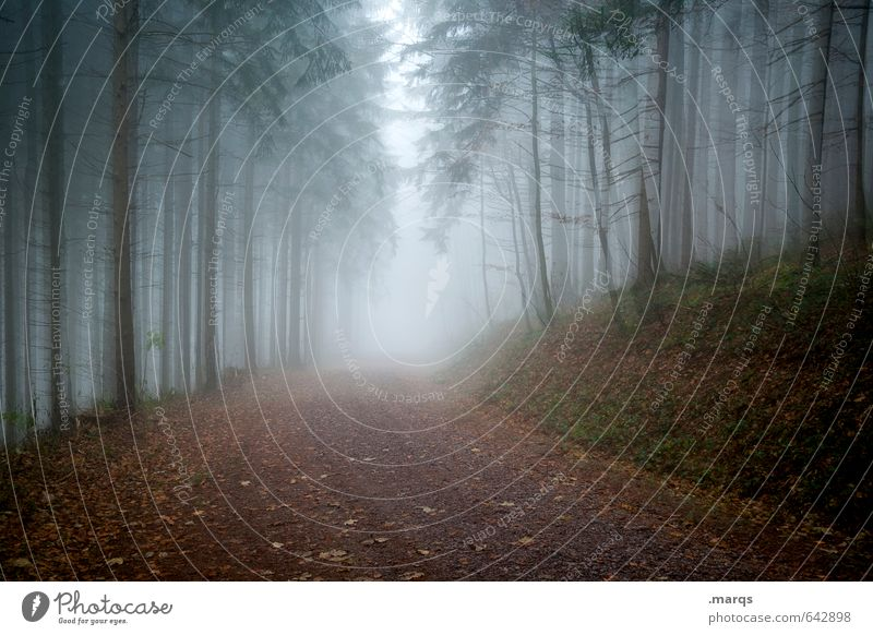 Weather | Cloudy Trip Adventure Environment Nature Landscape Autumn Climate Storm Fog Tree Coniferous trees Forest Lanes & trails Threat Dark Cold Gloomy Fear