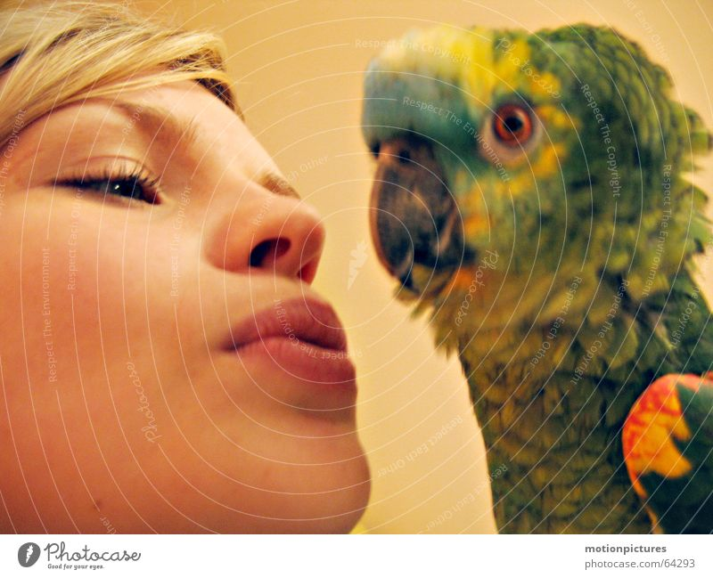 Beautiful Love Bird Feather Trust Well-being Love of animals Parrots