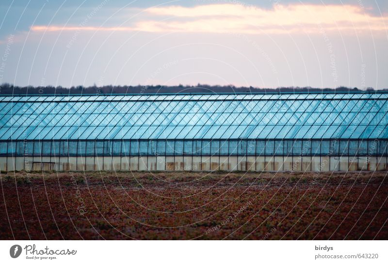 Glasshouse linear Agriculture Forestry Market garden Sky Clouds Sunrise Sunset Field Greenhouse Illuminate Esthetic Large Long Blue Symmetry Tradition Line