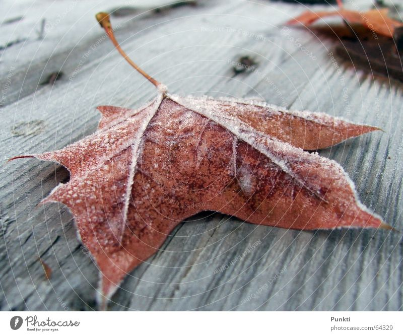 autumn foliage Autumn Leaf Cold Frost Ice Rope Morning Snow