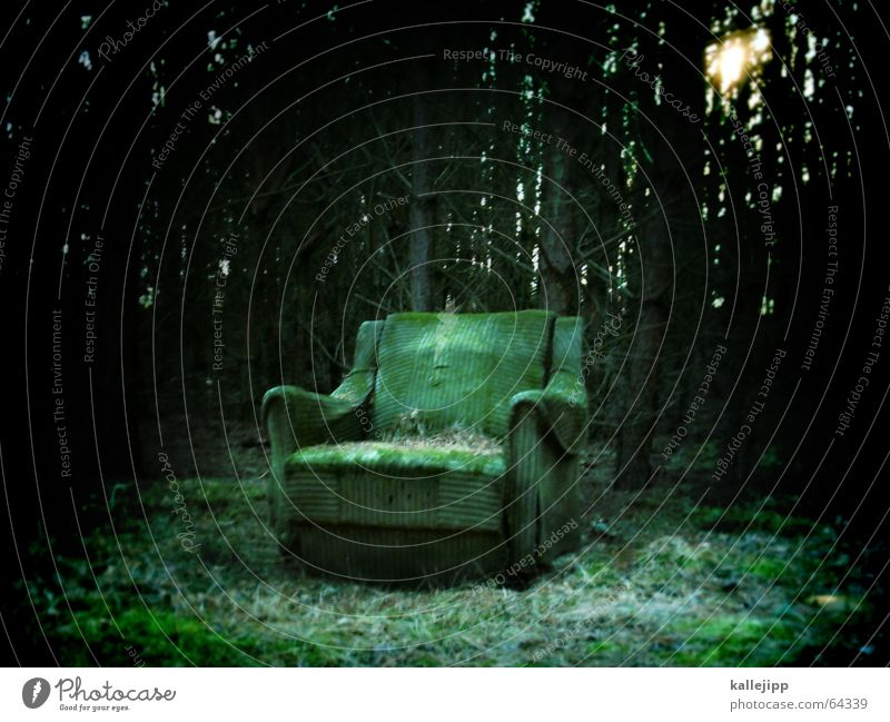 quiet place... Armchair Bolster Forest Green Dark Loneliness Calm Clearing Brandenburg Leaf Fir tree Light Matrix Creepy Fairy tale Mystic Chair Sit Nature